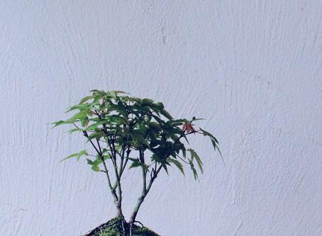 秋の花を楽しむ盆栽ワークショップ