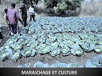 maraichage et culture.jpg