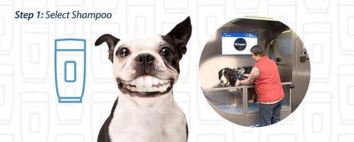 Dog Wash 4.JPG