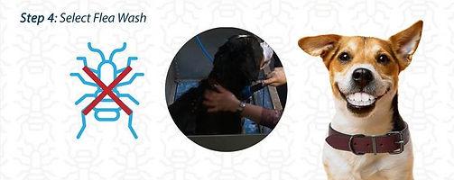 Dog Wash 7.JPG