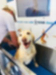Chili Dog Wash.JPG
