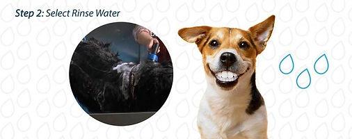 Dog Wash 5.JPG