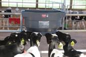 Calf Barn 2018 00242.jpg