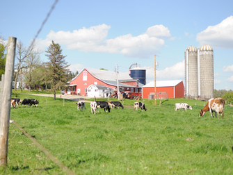 Gildale Holsteins to Host WHA State Picnic September 17