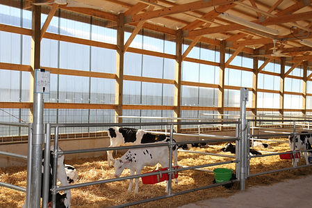 Selz-Pralle Dairy calf housing