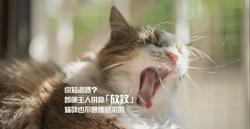 傳染度極高的「放蚊症」 貓咪點解可以免疫?