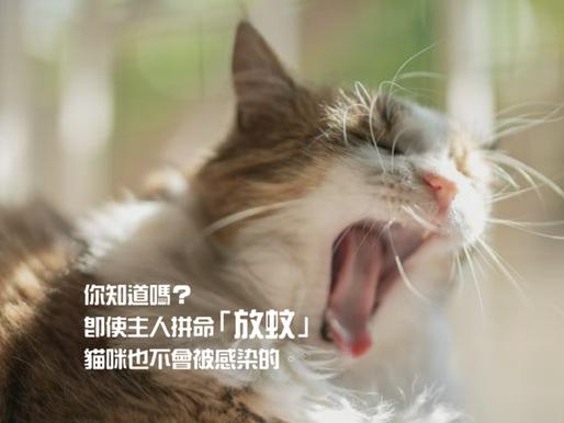 你知道嗎?即使主人拼命「放蚊」,貓咪也不會被感染的