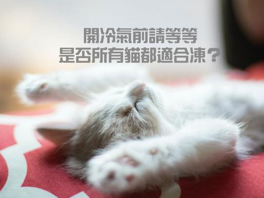 開冷氣前請等等!是否所有貓都適合凍?