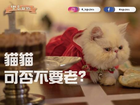5個情況老是常出現,因為「老貓失智」?