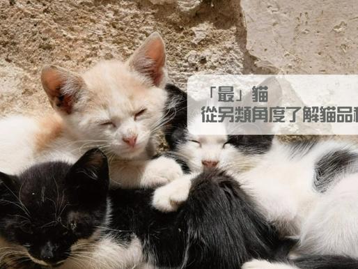 「最」貓,從另類角度了解貓品種