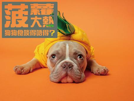菠蘿大熱,狗狗食啖得唔得?