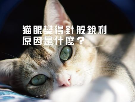 貓眼變得針般銳利,原因是什麼?