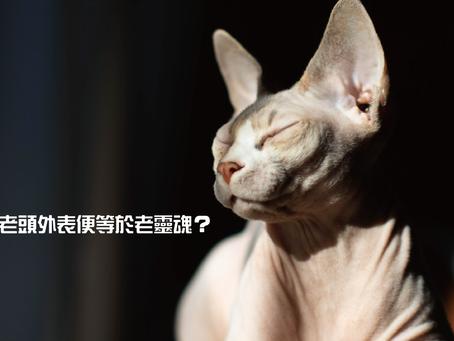 無毛貓──老頭外表便等於老靈魂?