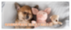 寄養服務 page banner-02.png