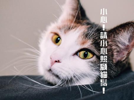 小心!點解貓鬚要小心照顧?