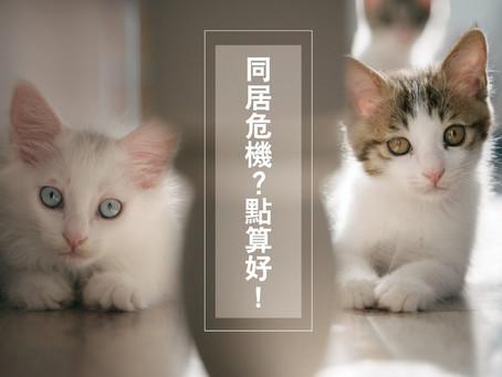 一屋不能養2貓? 4大法則化解同居大戰