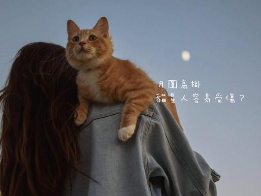 月圓高掛,貓星人容易受傷?