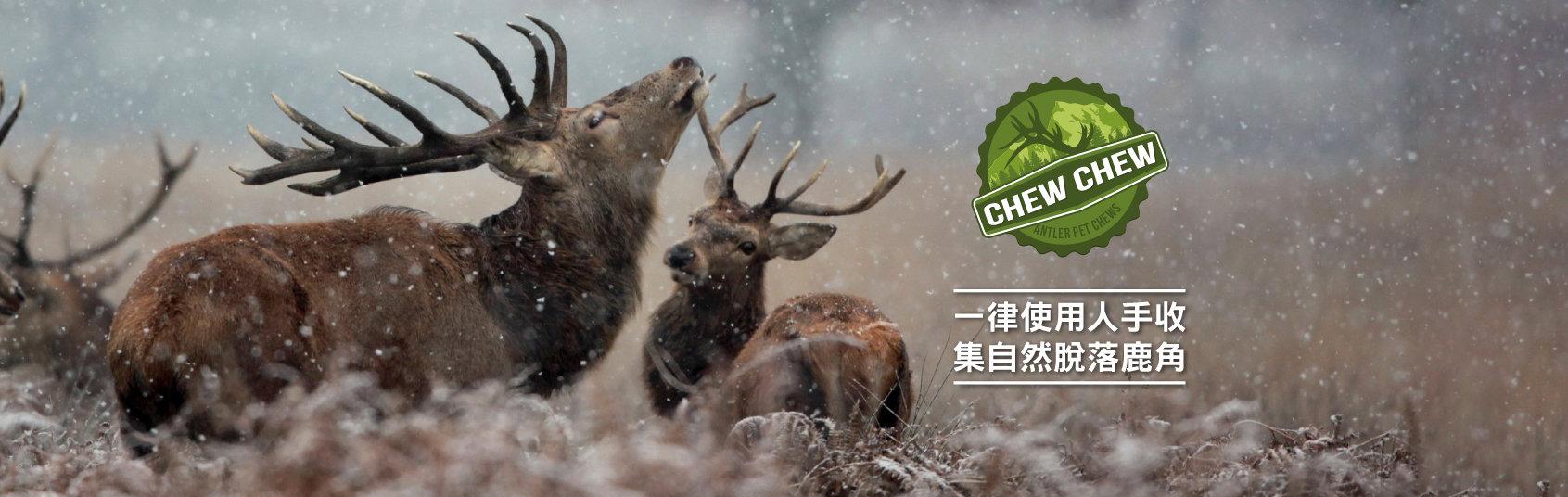 ChewChew-banner.jpg