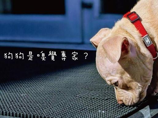 聞!讓狗狗盡情地聞吧!
