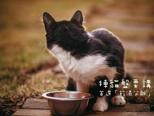 揀貓盤要講究,首選「乾濕分離」?