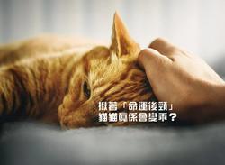 揪著「命運後頸」,貓貓真係會變乖?