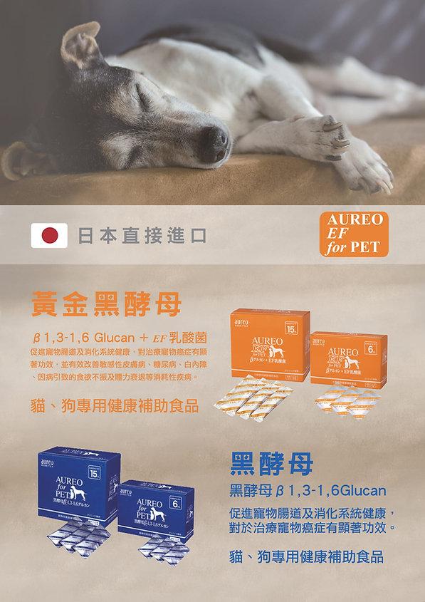 AUREO A3 poster x1-1.jpg