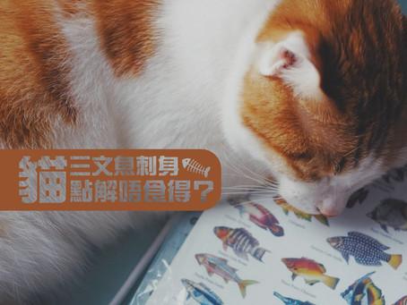 三文魚刺身,貓貓點解唔食得?