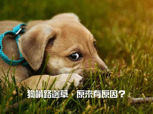 狗啃路邊草,原來有原因?