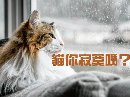 貓真的是寂寞絕緣體?