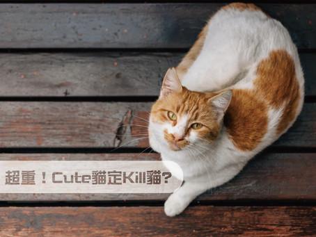 超重!Cute貓還是Kill貓