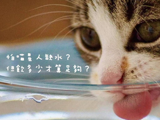 很怕喵星人缺水!你知道飲多少水才夠嗎?
