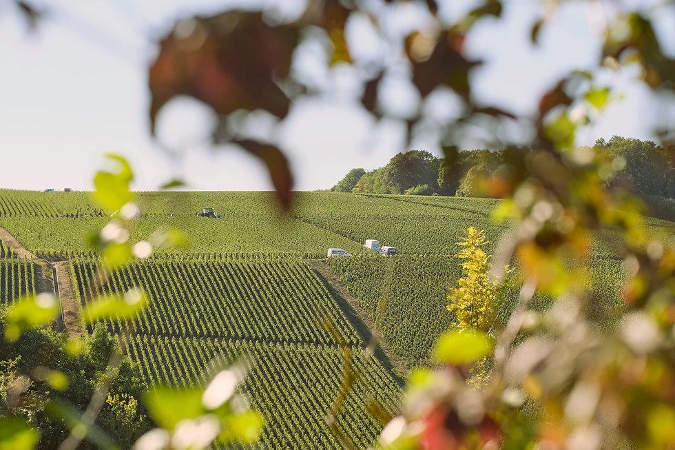 AC - oogst in champagne en wijngaarden.j