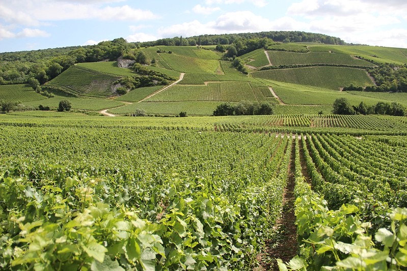E Vidal ADT Marne - Ay wijngaarden.JPG