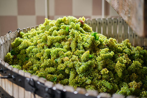 AC - Chardonnay druiven.jpg