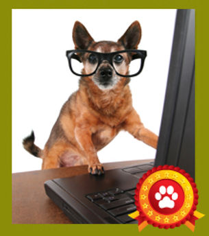 Dog with glasses in front of laptop