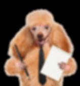 Dog-shutterstock_178863992-LR.png