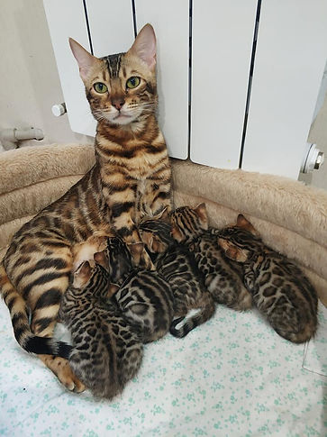Mom and kittens.jpg