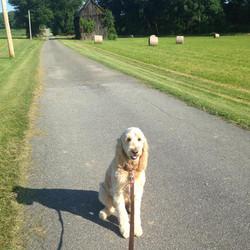 Dog on leash sitting