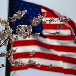 american-flag-flower-july-4th-1093645_ed