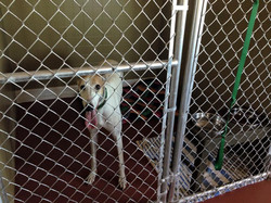 Dog in boarding facility