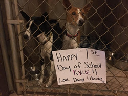 Dogs with Sign