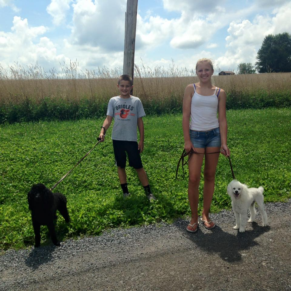 Siblings walking dogs
