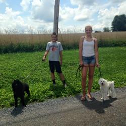 Siblings walking dogs