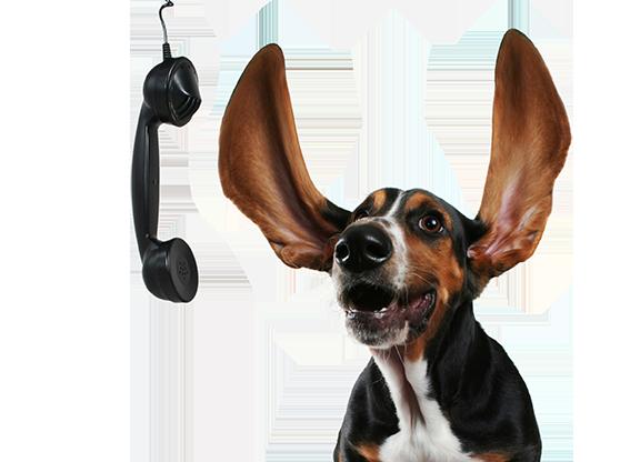 dog-shutterstock_21498394-LR.png