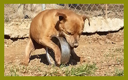 Dog playing with wheel
