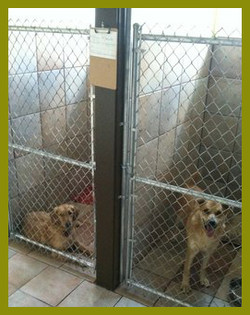 Dogs in Boarding Facility