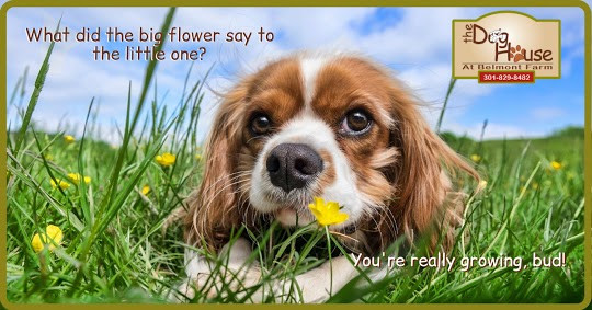 What Did The Big Flower Say To The Little One?