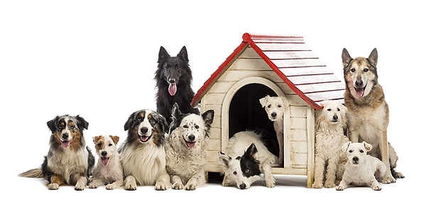 dogs-house-shutterstock_117850942-LR.png