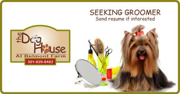 Seeking Groomer