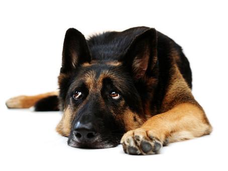 Corrección de Conductas no Deseadasen un Perro